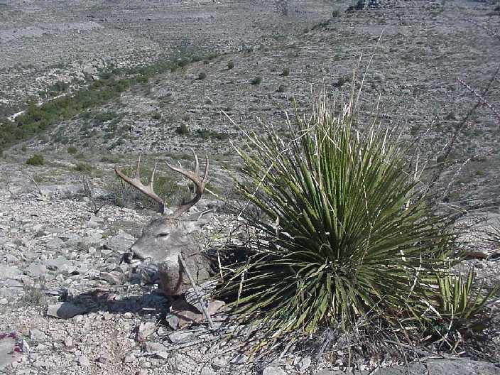 deer02.jpg